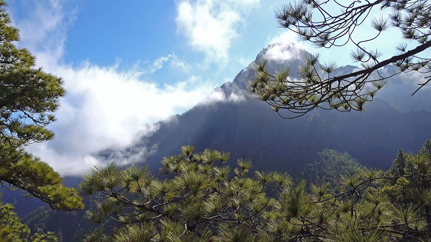 Cumbrecita Forest Walk La Palma Canary Islands